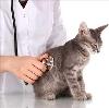 Ветеринарные клиники в Дудинке